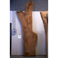 Black Walnut Live Edge Slab - #W329-4